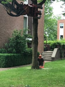 Afzagen boom op 5 juni 2018 - rotated